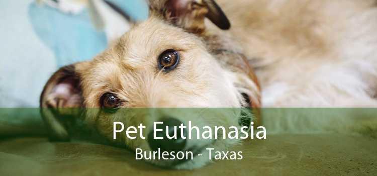 Pet Euthanasia Burleson - Taxas