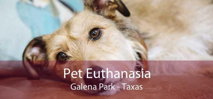 Pet Euthanasia Galena Park - Taxas