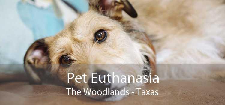 Pet Euthanasia The Woodlands - Taxas