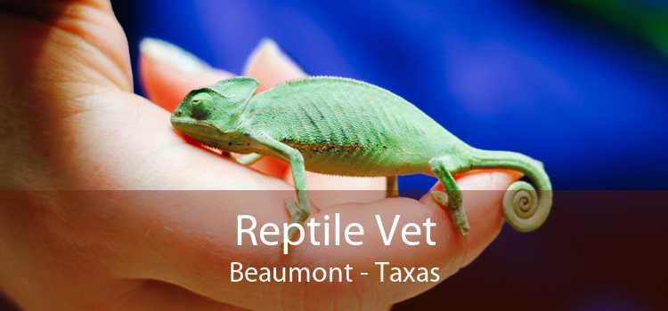 Reptile Vet Beaumont - Taxas