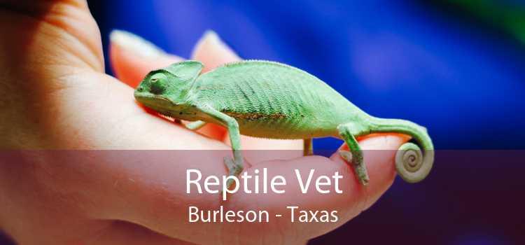 Reptile Vet Burleson - Taxas