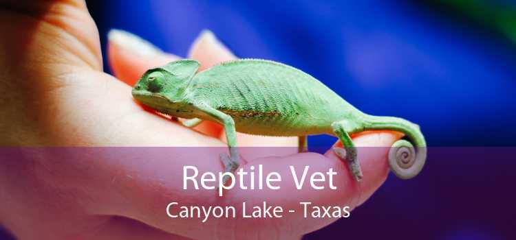 Reptile Vet Canyon Lake - Taxas