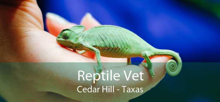 Reptile Vet Cedar Hill - Taxas