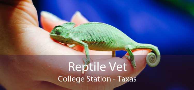Reptile Vet College Station - Taxas