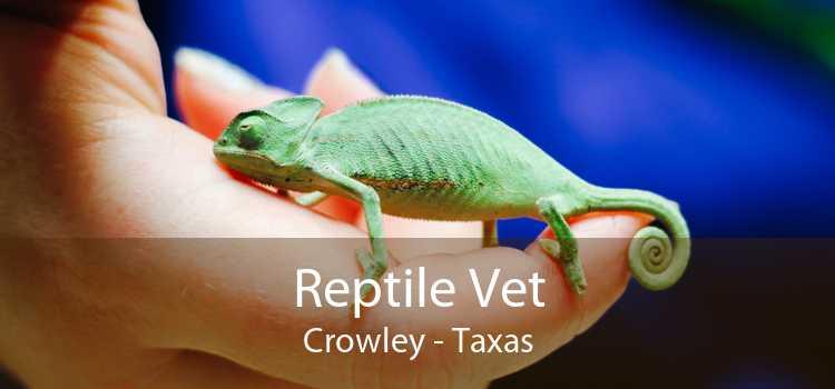 Reptile Vet Crowley - Taxas