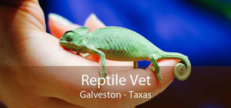 Reptile Vet Galveston - Taxas