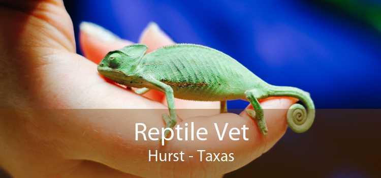 Reptile Vet Hurst - Taxas