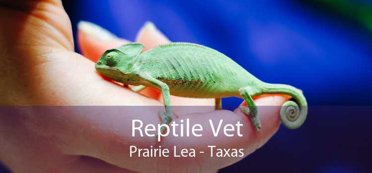 Reptile Vet Prairie Lea - Taxas