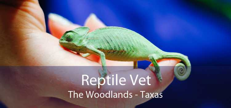 Reptile Vet The Woodlands - Taxas