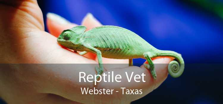 Reptile Vet Webster - Taxas