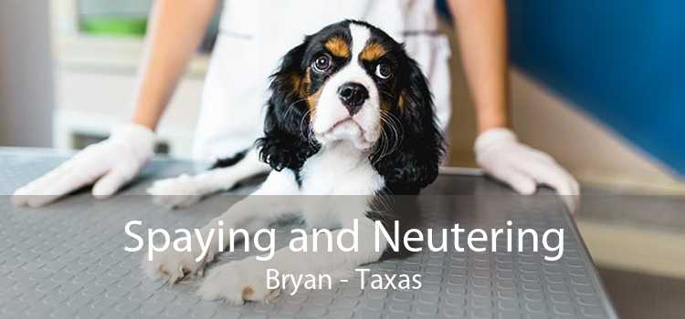 Spaying and Neutering Bryan - Taxas
