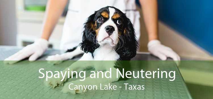 Spaying and Neutering Canyon Lake - Taxas