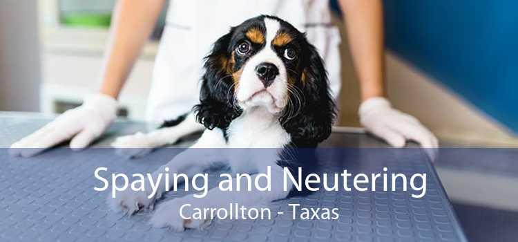 Spaying and Neutering Carrollton - Taxas