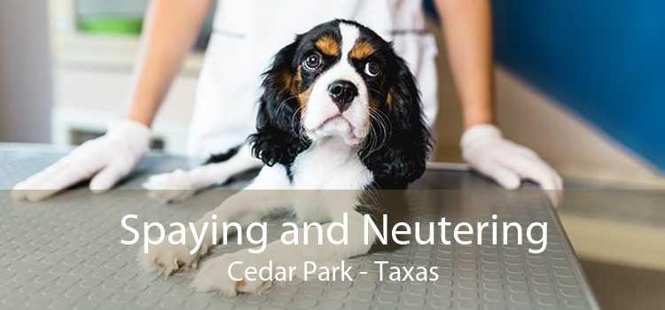 Spaying and Neutering Cedar Park - Taxas