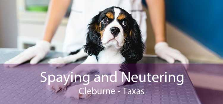 Spaying and Neutering Cleburne - Taxas