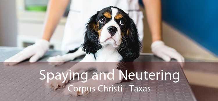 Spaying and Neutering Corpus Christi - Taxas