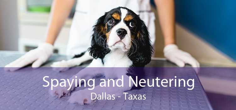 Spaying and Neutering Dallas - Taxas