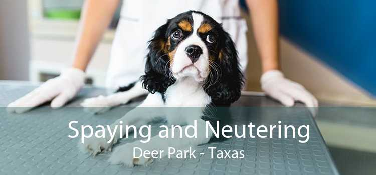 Spaying and Neutering Deer Park - Taxas
