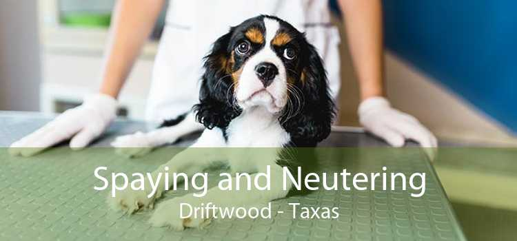 Spaying and Neutering Driftwood - Taxas