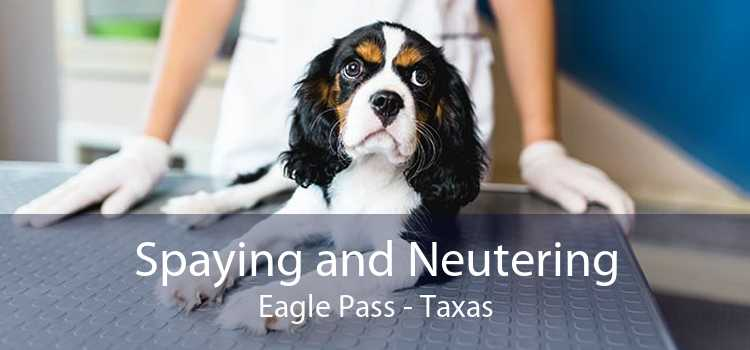 Spaying and Neutering Eagle Pass - Taxas