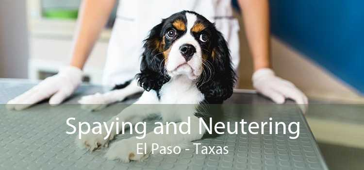 Spaying and Neutering El Paso - Taxas