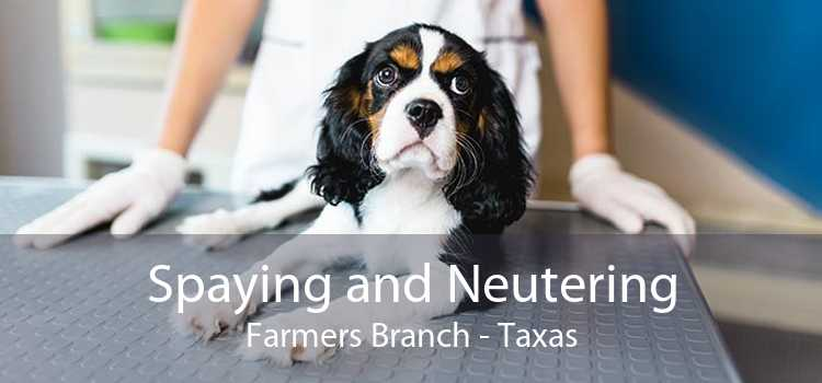 Spaying and Neutering Farmers Branch - Taxas