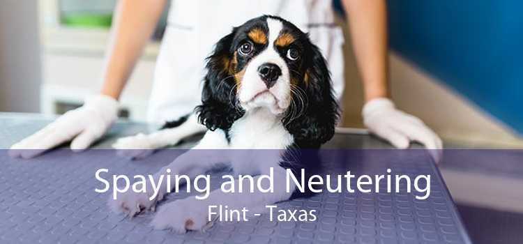 Spaying and Neutering Flint - Taxas