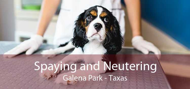 Spaying and Neutering Galena Park - Taxas