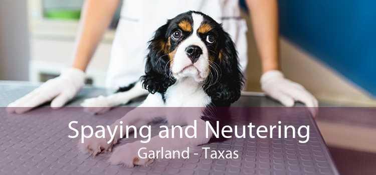 Spaying and Neutering Garland - Taxas