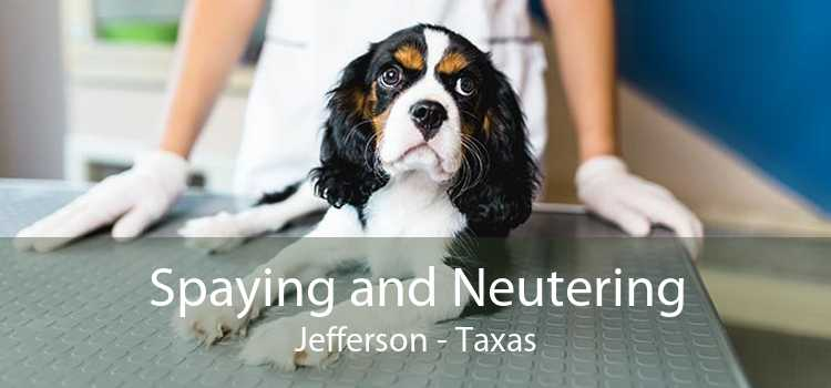 Spaying and Neutering Jefferson - Taxas