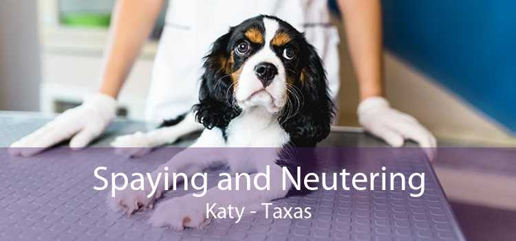 Spaying and Neutering Katy - Taxas