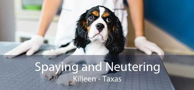 Spaying and Neutering Killeen - Taxas