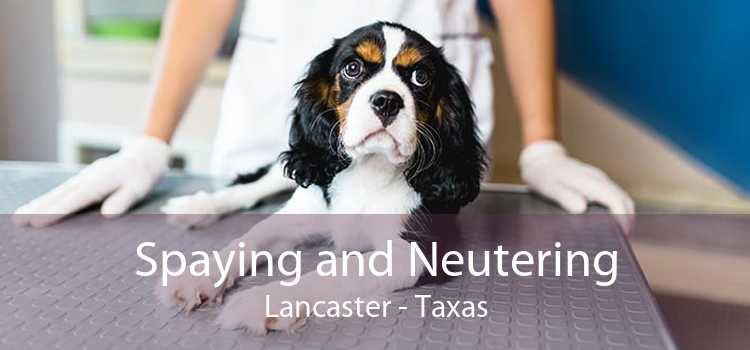 Spaying and Neutering Lancaster - Taxas