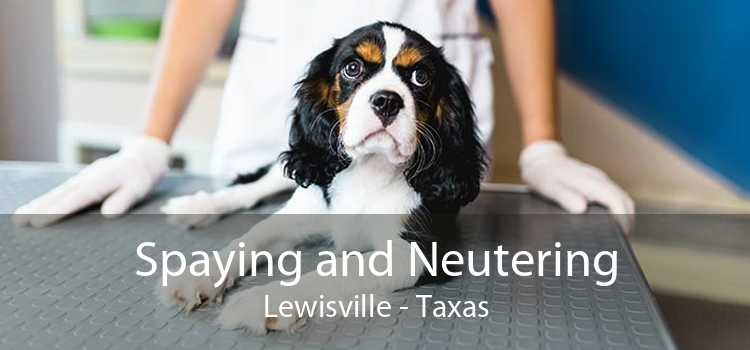 Spaying and Neutering Lewisville - Taxas