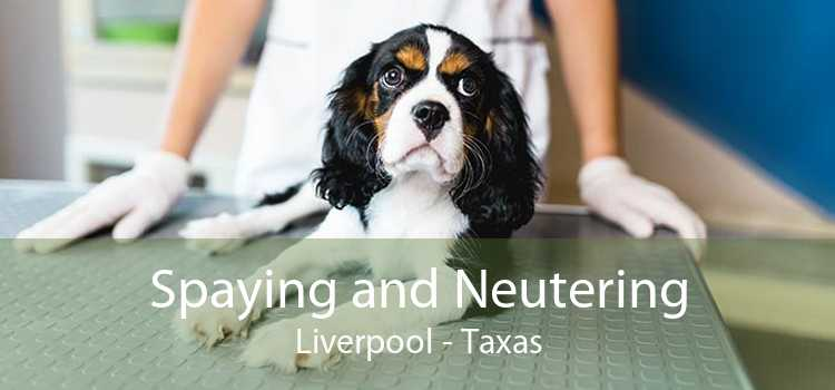 Spaying and Neutering Liverpool - Taxas