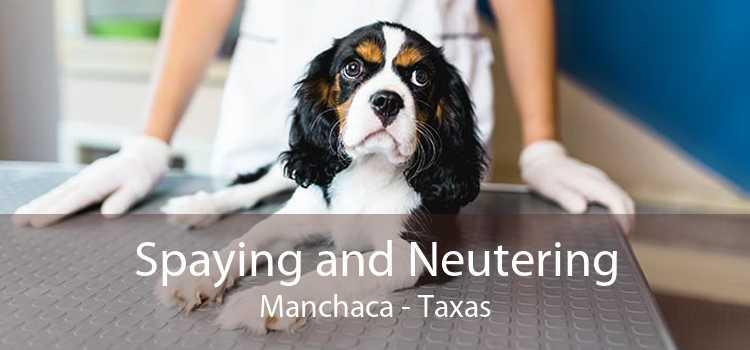 Spaying and Neutering Manchaca - Taxas