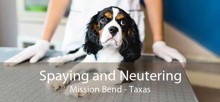 Spaying and Neutering Mission Bend - Taxas