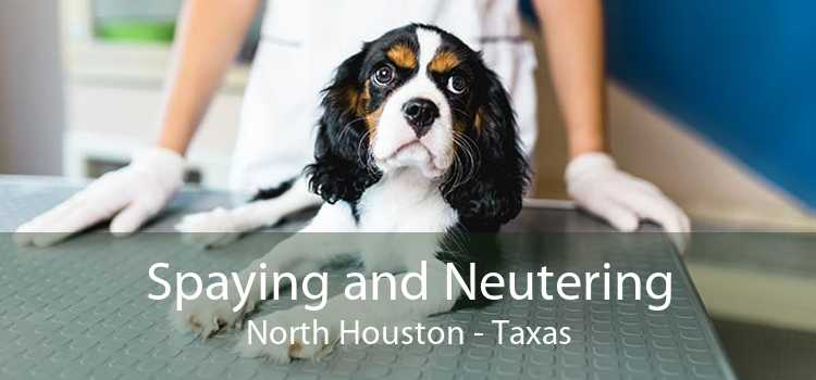 Spaying and Neutering North Houston - Taxas