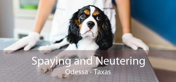 Spaying and Neutering Odessa - Taxas