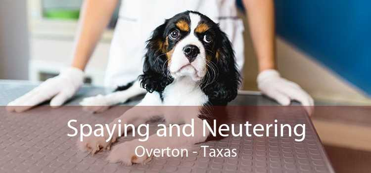 Spaying and Neutering Overton - Taxas