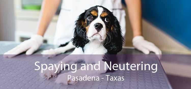 Spaying and Neutering Pasadena - Taxas
