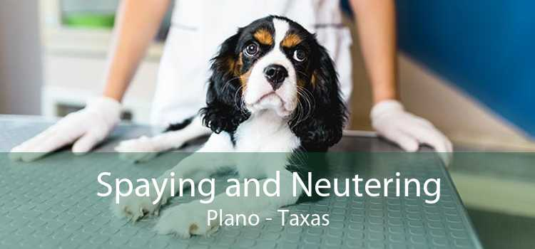 Spaying and Neutering Plano - Taxas