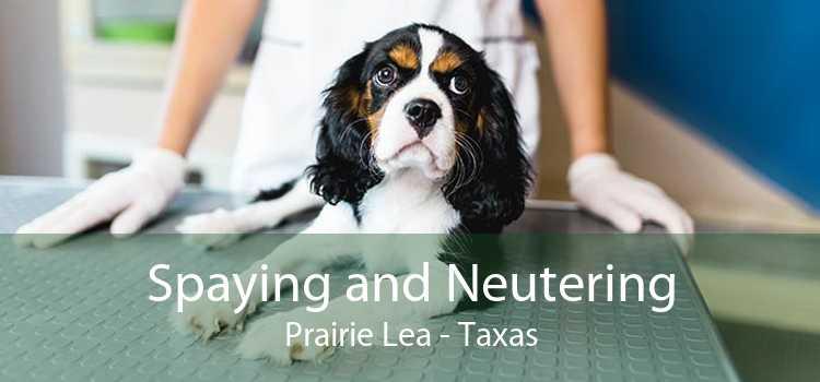 Spaying and Neutering Prairie Lea - Taxas