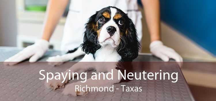 Spaying and Neutering Richmond - Taxas