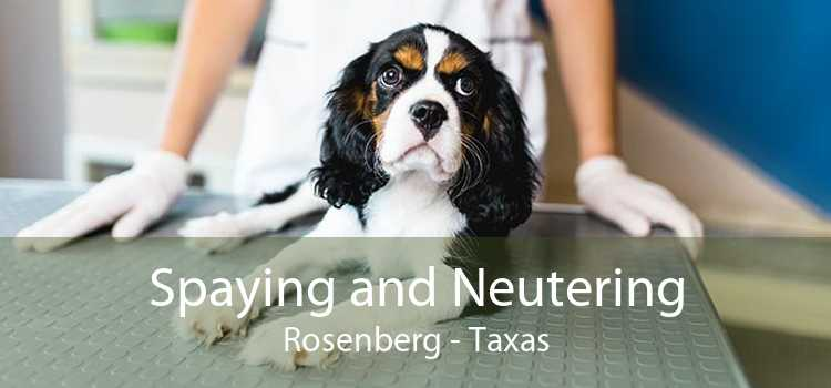 Spaying and Neutering Rosenberg - Taxas