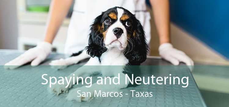 Spaying and Neutering San Marcos - Taxas