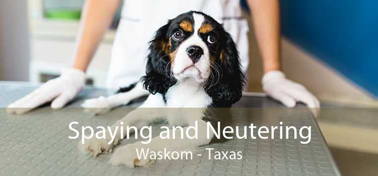 Spaying and Neutering Waskom - Taxas