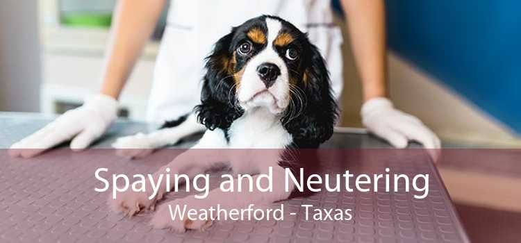 Spaying and Neutering Weatherford - Taxas