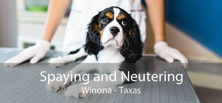 Spaying and Neutering Winona - Taxas
