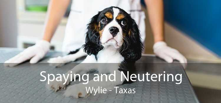 Spaying and Neutering Wylie - Taxas